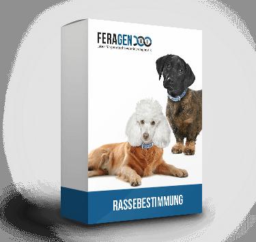 DNA Hunde Test - Die Rassebestimmung