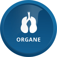 Onlineshop Icon Organe
