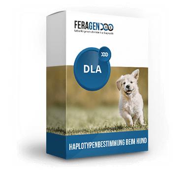 DLA-Haplotypenbestimmung